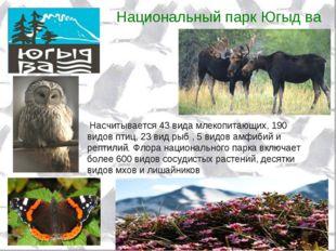 Национальный парк Югыд ва Насчитывается 43 вида млекопитающих, 190 видов птиц