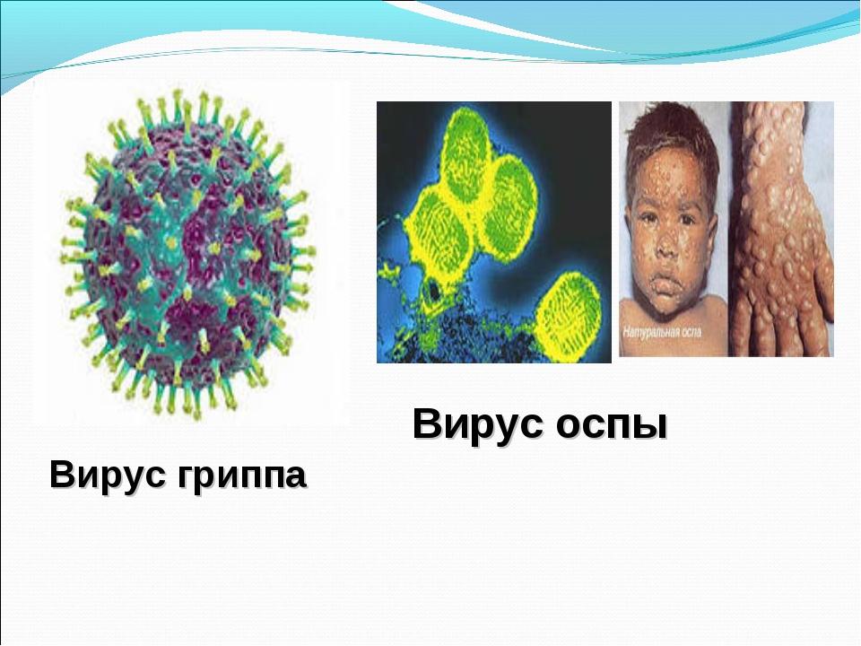 Вирус гриппа Вирус оспы