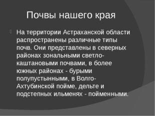 Почвы нашего края На территории Астраханской области распространены различные