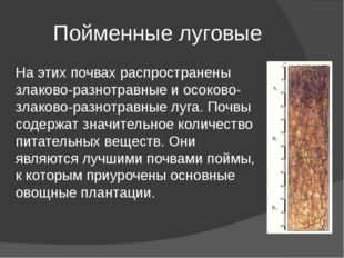 Пойменные луговые На этих почвах распространены злаково-разнотравные и осоков
