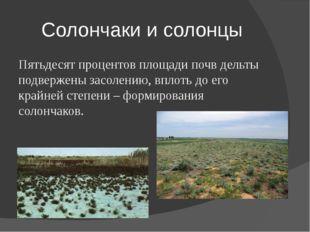 Солончаки и солонцы Пятьдесят процентов площади почв дельты подвержены засоле