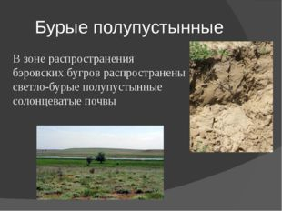 Бурые полупустынные В зоне распространения бэровских бугров распространены св