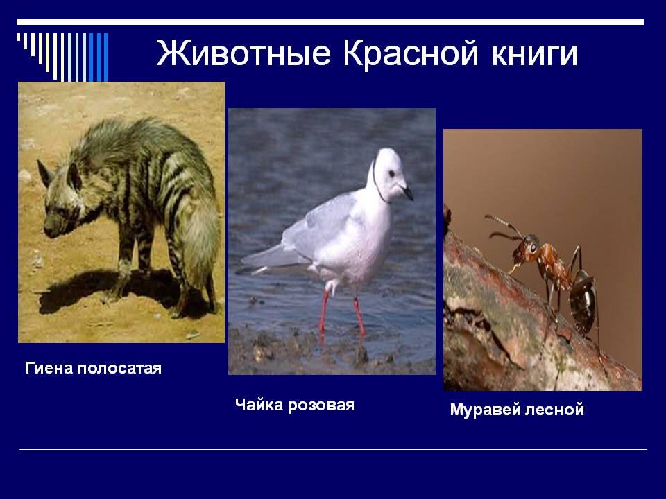 http://dreempics.com/img/picture/Dec/06/cc81699bd17b7e3428e5246fd4747615/11.jpg