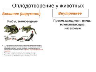 Оплодотворение у животных Внешнее (наружное) Внутреннее Рыбы, земноводные Пре