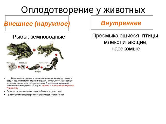Оплодотворение у животных Внешнее (наружное) Внутреннее Рыбы, земноводные Пре...