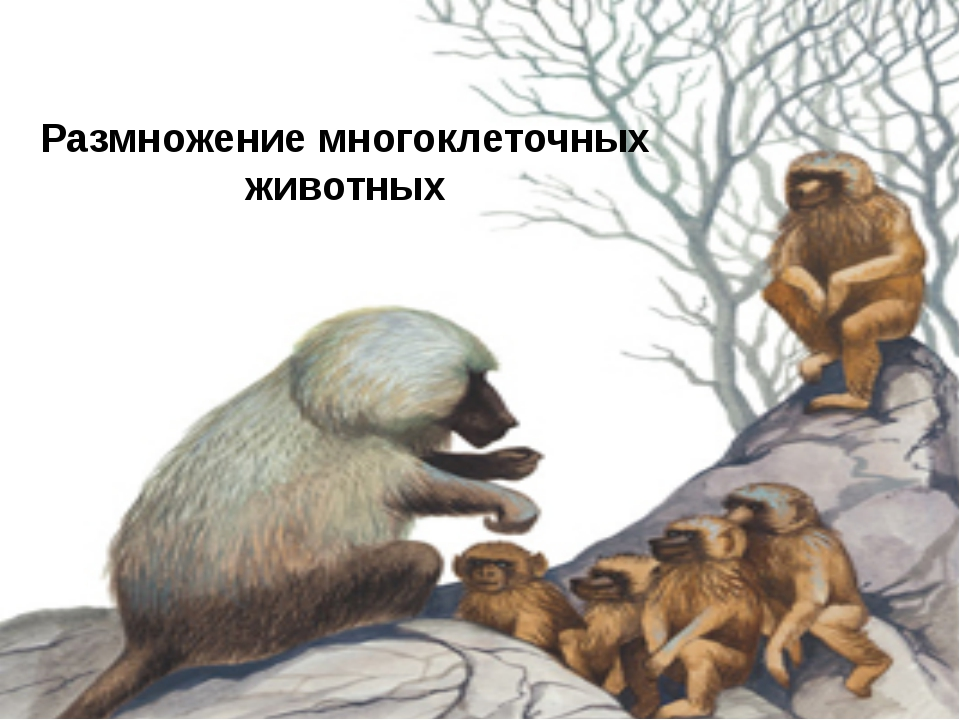 Размножение многоклеточных животных