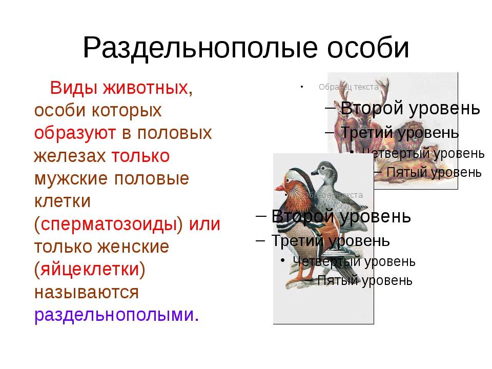 Раздельнополые особи Виды животных, особи которых образуют в половых железах...