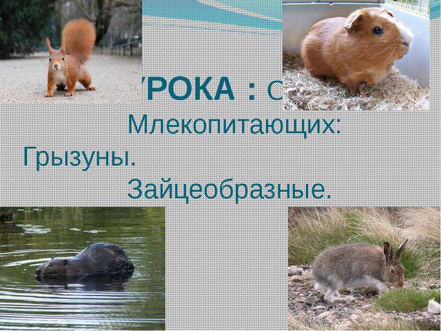 ТЕМА УРОКА : Отряд Млекопитающих: Грызуны. Зайцеобразные.