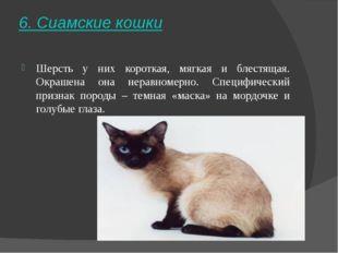 6. Сиамские кошки Шерсть у них короткая, мягкая и блестящая. Окрашена она нер