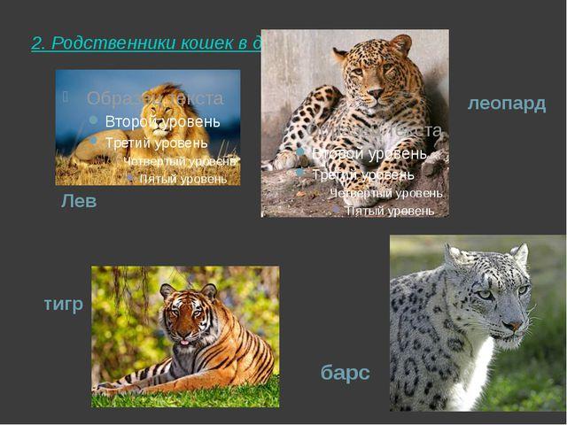 2. Родственники кошек в дикой природе леопард Лев барс тигр