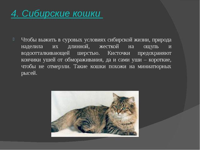 4. Сибирские кошки Чтобы выжить в суровых условиях сибирской жизни, природа...