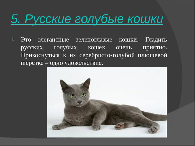 5. Русские голубые кошки Это элегантные зеленоглазые кошки. Гладить русских г...