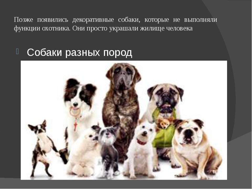 Позже появились декоративные собаки, которые не выполняли функции охотника. О...