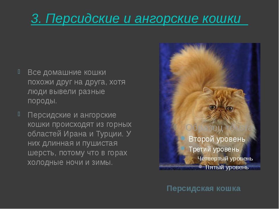 3. Персидские и ангорские кошки  Персидская кошка Все домашние кошки похожи...