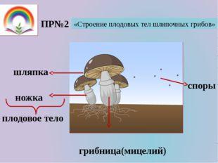 ПР№2 «Строение плодовых тел шляпочных грибов» плодовое тело шляпка ножка спор