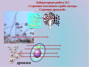 Лабораторная работа №7 «Строение плесневого гриба мукора. Строение дрожжей» м