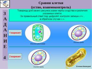 Сравни клетки (устно, взаимоконтроль) З А Д А Н И Е 4