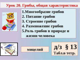 Урок 20. Грибы, общая характеристика 1.Многообразие грибов 2. Питание грибов
