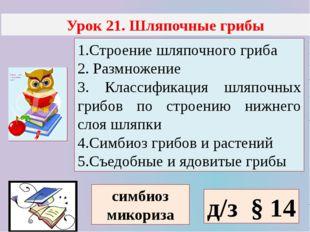 Урок 21. Шляпочные грибы 1.Строение шляпочного гриба 2. Размножение 3. Класс
