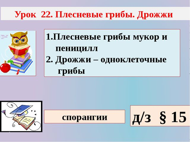 Урок 22. Плесневые грибы. Дрожжи 1.Плесневые грибы мукор и пеницилл 2. Дрожж...