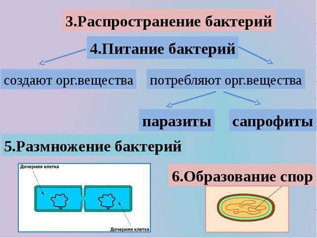 3.Распространение бактерий 4.Питание бактерий паразиты сапрофиты 5.Размножени...