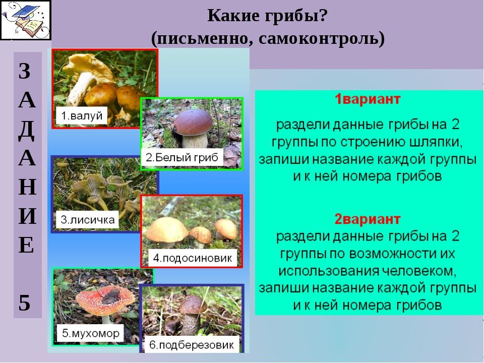 Какие грибы? (письменно, самоконтроль) З А Д А Н И Е 5