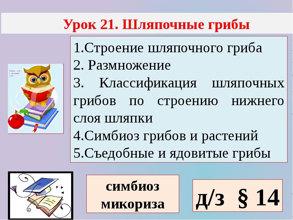 Урок 21. Шляпочные грибы 1.Строение шляпочного гриба 2. Размножение 3. Класс...