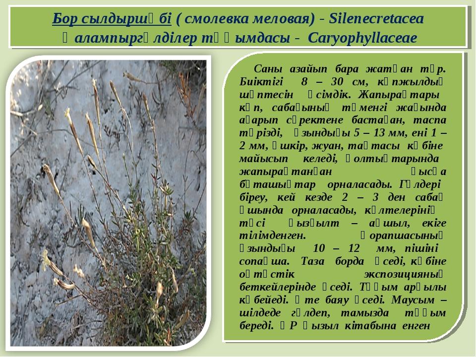 Саны азайып бара жатқан түр. Биіктігі 8 – 30 см, көпжылдық шөптесін өсімдік....