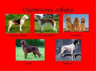 Охотничьи собаки Русская борзая Спаниель Русская гончая Сеттер Пойнтер