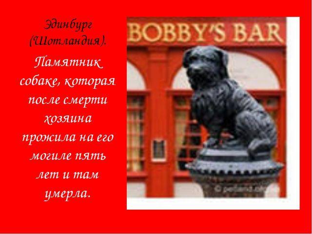 Эдинбург (Шотландия). Памятник собаке, которая после смерти хозяина прожила н...