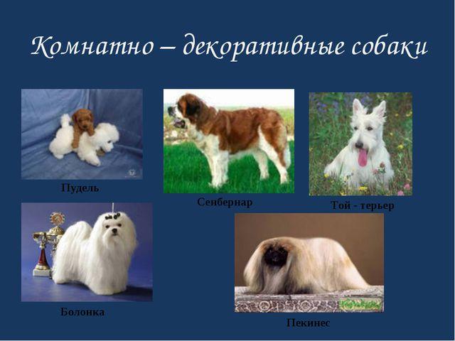 Комнатно – декоративные собаки Пудель Той - терьер Сенбернар Болонка Пекинес