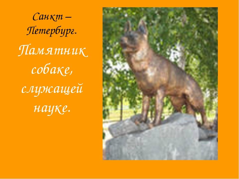 Санкт – Петербург. Памятник собаке, служащей науке.