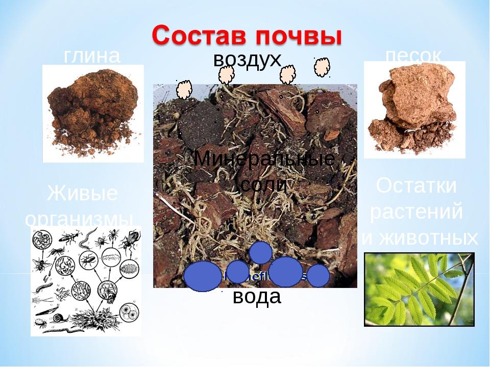 глина песок Живые организмы Остатки растений и животных вода воздух Минеральн...
