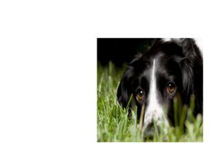 собака Лежит — молчит, Подойдёшь — заворчит. Кто к хозяину идёт, Она знать да