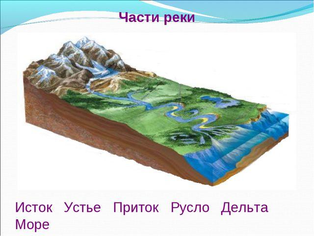 Исток Устье Приток Русло Дельта Море Части реки