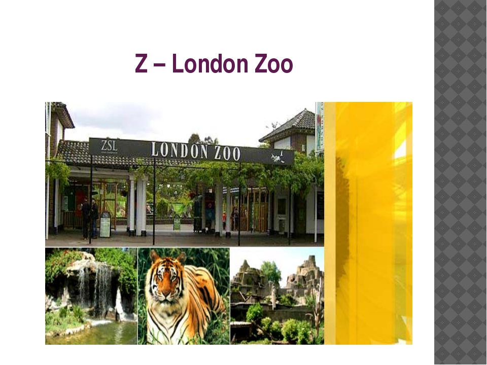 Z – London Zoo