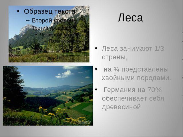 Леса Леса занимают 1/3 страны, на ¾ представлены хвойными породами. Германия...