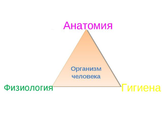 Организм человека Анатомия Физиология Гигиена