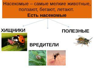Насекомые – самые мелкие животные, ползают, бегают, летают. Есть насекомые ХИ