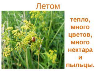 Летом тепло, много цветов, много нектара и пыльцы.