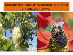 Многие насекомые питаются нектаром и пыльцой цветов.