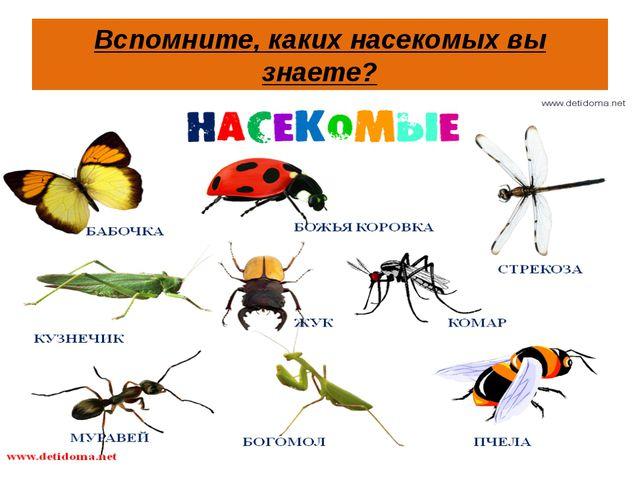 Вспомните, каких насекомых вы знаете?