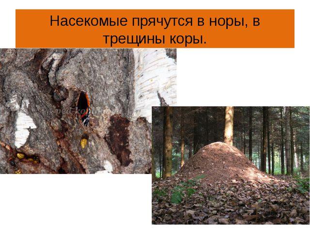 Насекомые прячутся в норы, в трещины коры.