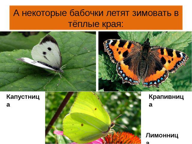 А некоторые бабочки летят зимовать в тёплые края: Капустница Крапивница Лимон...
