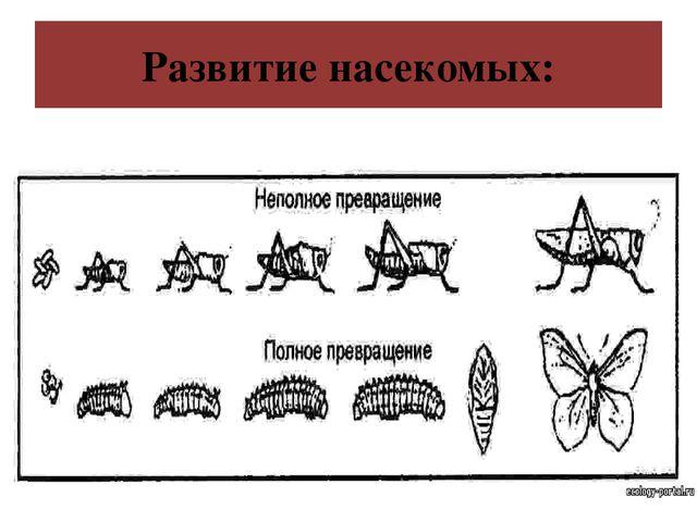 Развитие насекомых:
