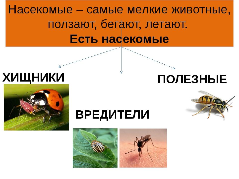 Насекомые – самые мелкие животные, ползают, бегают, летают. Есть насекомые ХИ...
