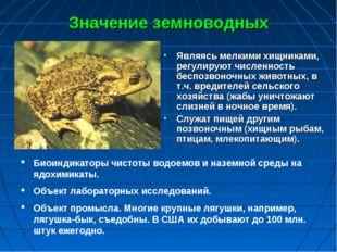 Значение земноводных Являясь мелкими хищниками, регулируют численность беспоз