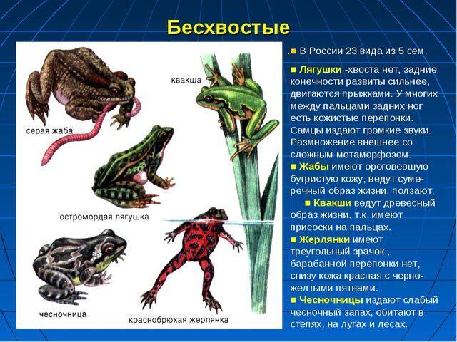 Бесхвостые . ■ В России 23 вида из 5 сем. ■ Лягушки -хвоста нет, задние конеч...