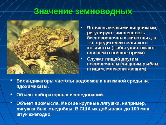 Значение земноводных Являясь мелкими хищниками, регулируют численность беспоз...