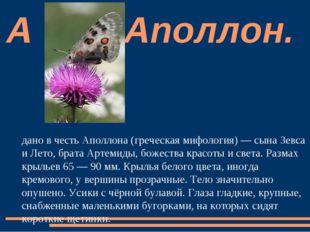 Аполло́н — дневная бабочка семейства Парусники. Название дано в честь Аполлон
